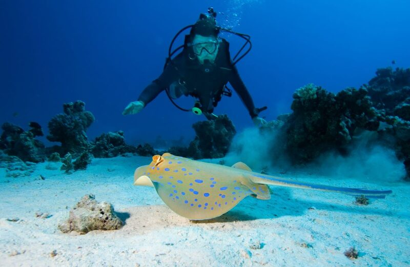 Diving at the Great Barrier Reef is one of the best thing to do in Cairns!
