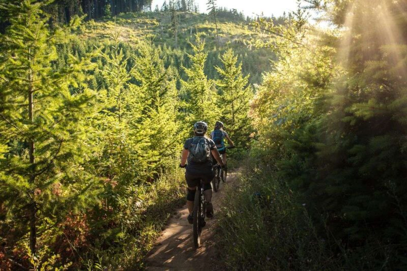 Two mountain bikers on trail through forest near Cairns