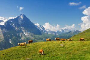 WWOOFing in Switzerland