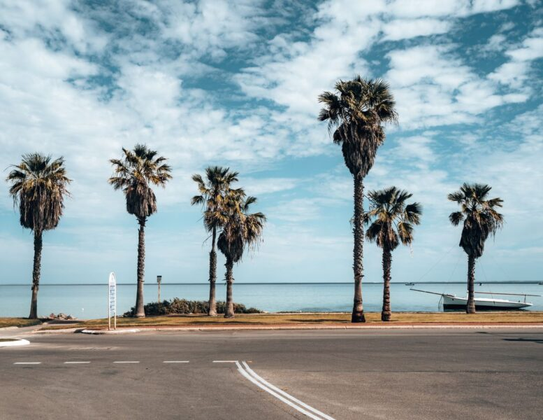 Palm trees lining carpark at Shark Bay - visit for one of the best things to do on the West Coast of Australia