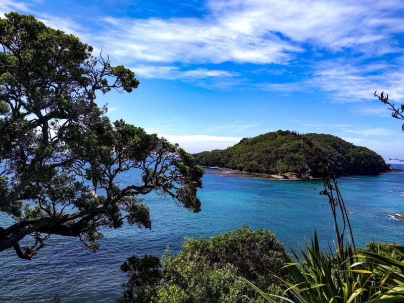 Island in ocean with tree and plants in the foreground - snorkeling here is one of the best things to do in Northland