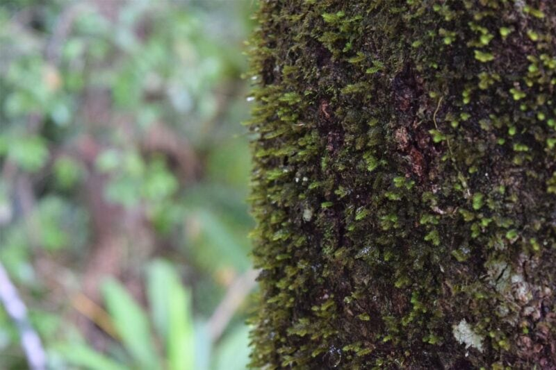Close up of tree trunk covered in moss during a hike from the Skyrail - one of the best things to do in Queensland