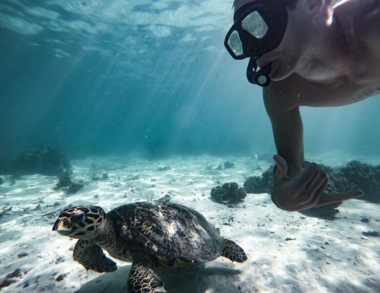 Person snorkeling underwater with a swimming turtle on the Ningaloo Reef - snorkeling here is one of the best things to do in Western Australia