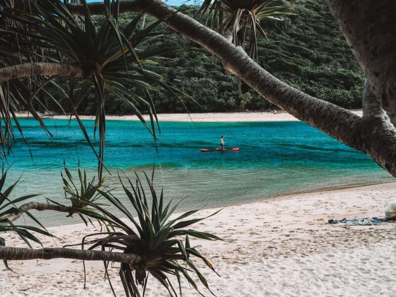 Paddleboarder seen through palm trees with beach in foreground at Tallebedgera Creek - one of the best things to do on the Gold Coast