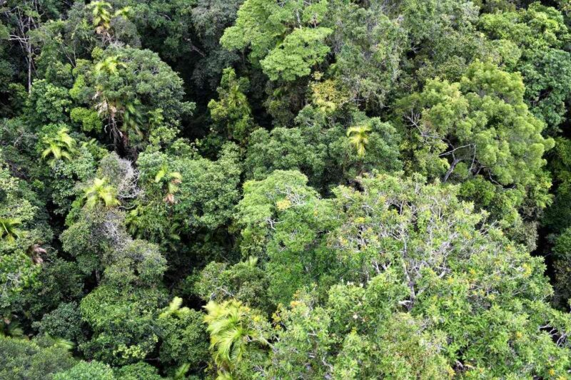 View over tree canopy in the Daintree Rainforest in Queensland