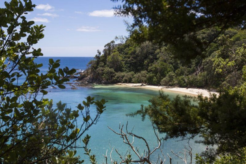 Beach and ocean with trees in foreground and background at the Tutukaka Coast - visit for one of the best things to do in Northland