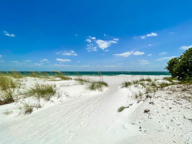 Grassy sand dunes in Egmont Key State Park