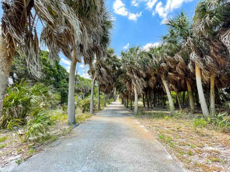 Path lined with palm trees at Egmont Key State Park