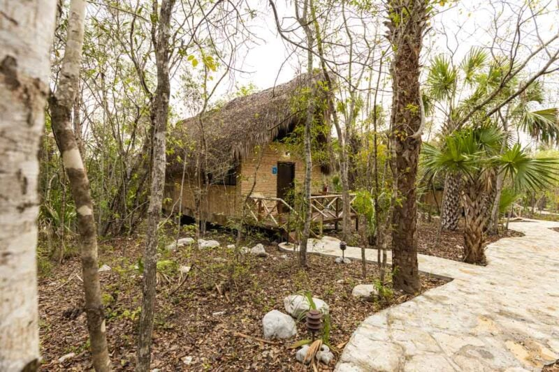 Small thatched cabin in the trees with a path leading to it in Selva Teenek in Huasteca Potosina