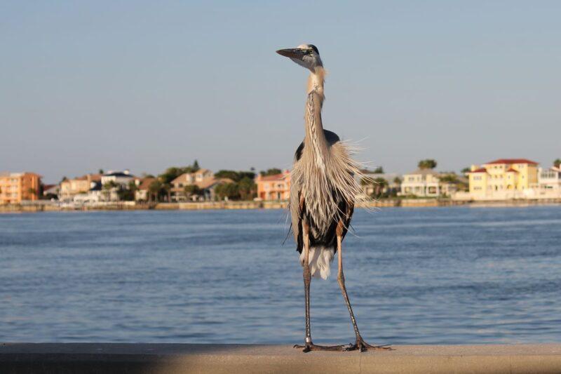 Bird standing near water in Pass a Grill Beach