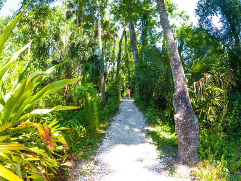Trail through the trees in Weeki Wachee near Tampa, Florida